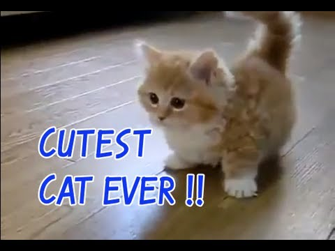 Cutest Cat Ever Youtube