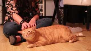 Tigger the cat loves spanks and tooshy rubs