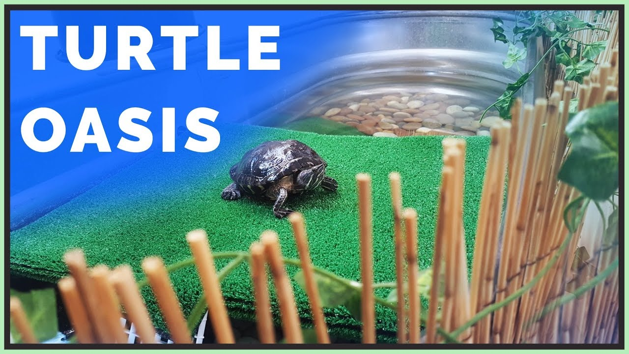 How To Care For Aquatic Turtles Such As Red Eared Sliders
