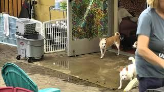 Outside Dog Yard Cam 09-22-2018 09:30:28 - 10:30:29