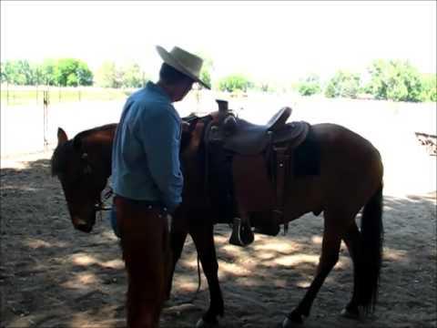 Hudson , BLM Mustang, Retraining 1st ride, Sean Davies, Coloradoreinsman
