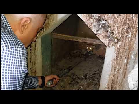 ثعلب يقتحم بيت دجاج وسط مدينة رام الله ويقع في ورطه مع جمال العمواسي