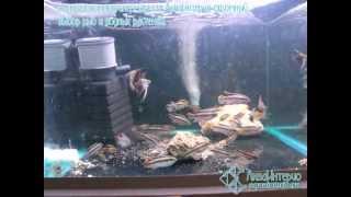Где купить аквариумных рыбок?(Где купить аквариумных рыбок? Представленный ролик дает наглядный и убедительный ответ: конечно же в АкваИ..., 2012-03-01T23:43:07.000Z)