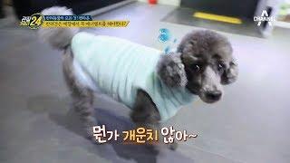 '매너가 강아지를 만든다!' 공공장소에선 '기저귀 착용' 부탁해요★_관찰카메라24_선공개