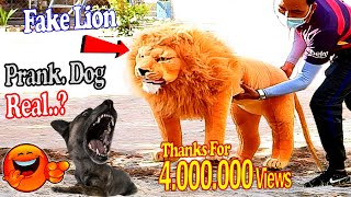 Big Fake Lion vs Real Dogs Prank Very Funny - Must Watch Funny Vided We on Rural Prank Dogs