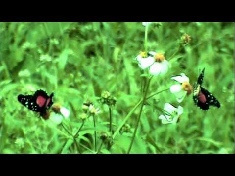 naturaleza:-plantas,-paisajes-y-mariposas