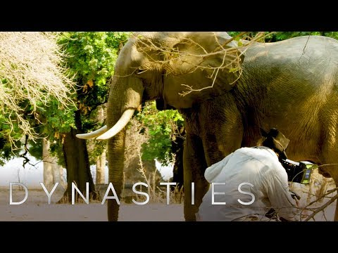 So You Want To Be A Wildlife Filmmaker? | Dynasties: Behind The Scenes | Earth Unplugged