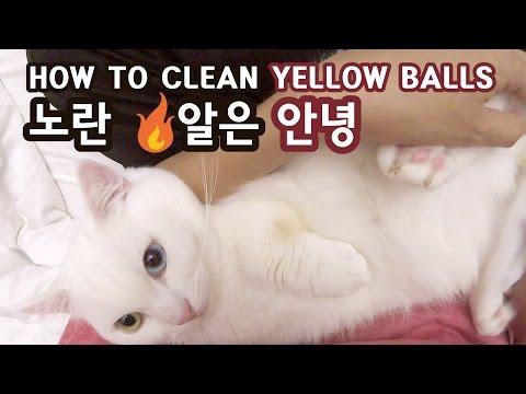 고양이 꼬부기 노란 X알은 안녕 How to Clean Cat's Balls