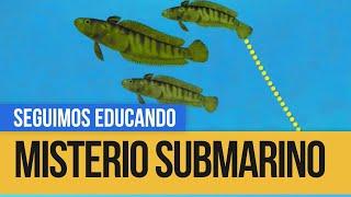Misterio Submarino: Los (in) adaptados - Seguimos Educando