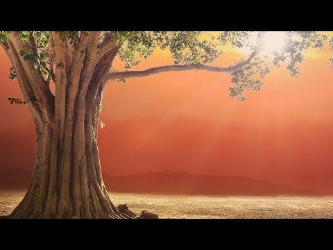 MAGICAL HEALING MANTRA ❯ Prana Apana Sushumna Hari Meditation