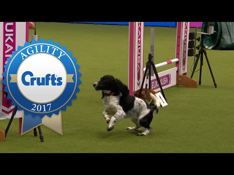 Agility - Small Team Final - Part 2/3   Crufts 2017