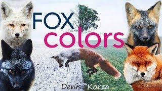 Цвета Лис 🦊 Fox Colors 😍 Интересные факты ⚡ Foxes 👍 4K