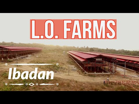 Drone Shot | LO Farms, Ibadan, Nigeria (Poultry, Cattle, Fish)