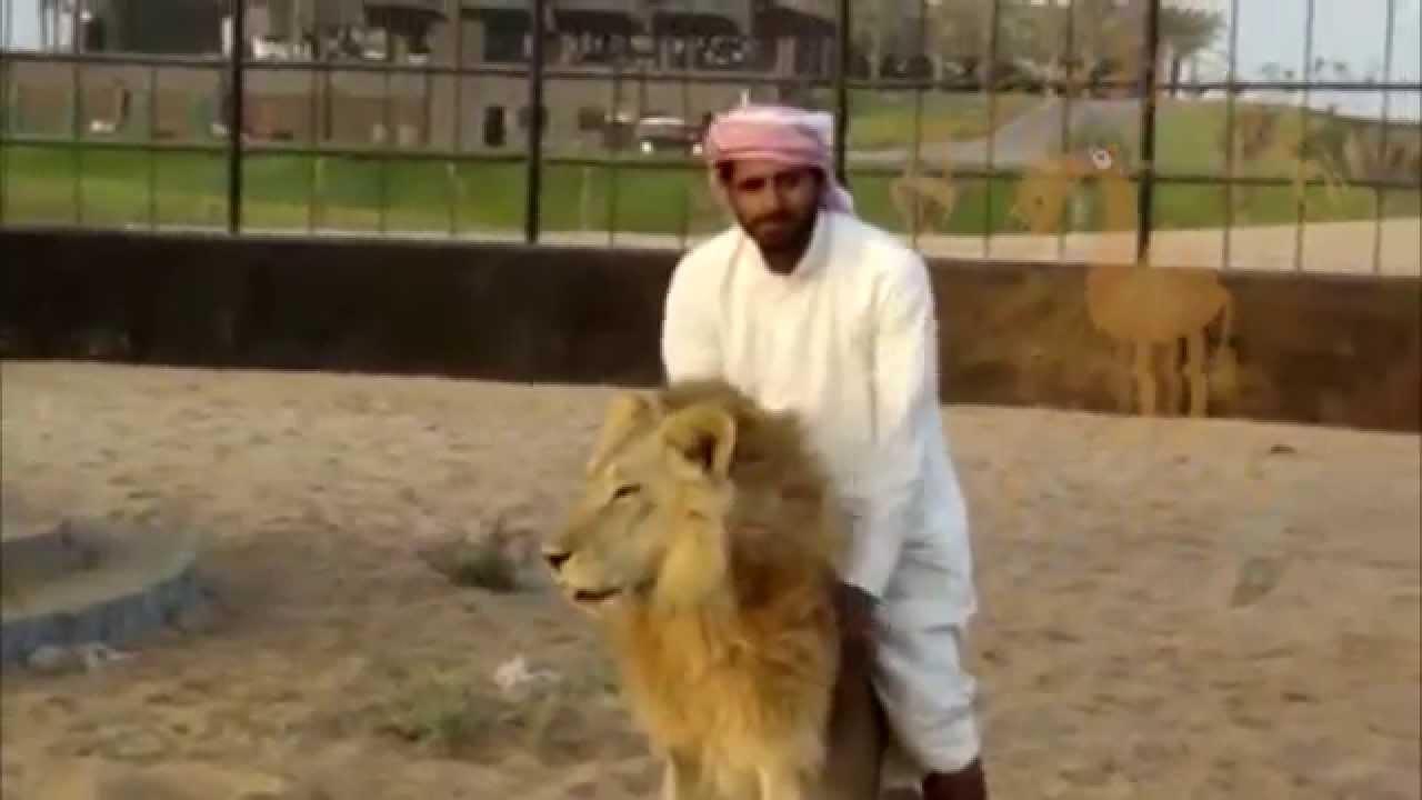 Aninimal Book: An Arab man riding his lion - YouTube
