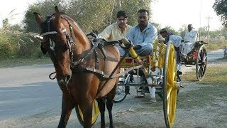 Charci Wachera king of pakistan Ghourghushti Tanga  Race's