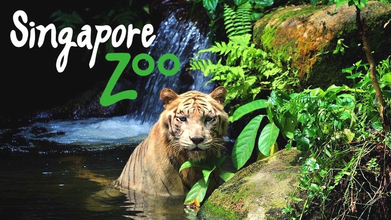 ЗООПАРК В СИНГАПУРЕ | что посмотреть, развлечения, цены. Singapore Zoo Отдых в ЮВА влог