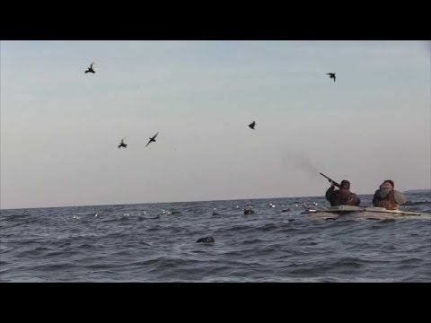 Layout Hunting: Sea Ducks Of The Chesapeake Bay