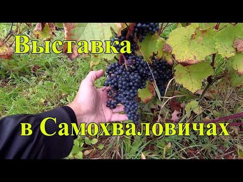 🔴🔴Выставка винограда в