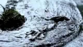 Туман  (2005) Трейлер