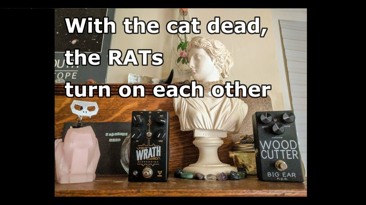 Rat Battle Big Ear Nyc Wood Cutter Vs Foxpedal Wrath V2 Youtube