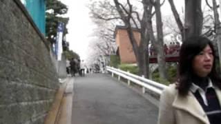 自分の家の近所の桜坂。 ゆうや、ともみ、ヨシで行きました。