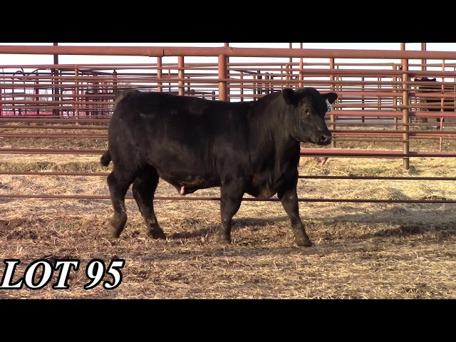 Mead Angus Farms Lot 95