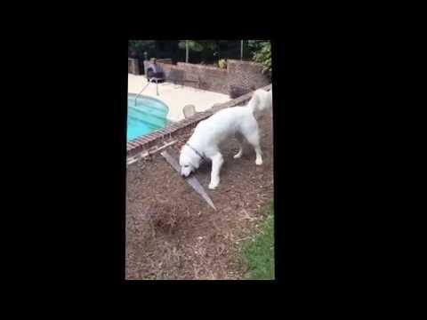 Dog funny fail