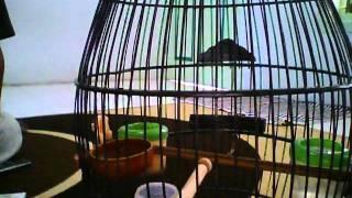 Burung Cholibri.avi