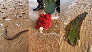 해산물 잡기 2021   어부가 해변에서 해산물과 심해…