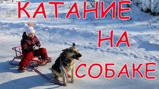 Катаемся на собаке!!! Что-то пошло не так...Зимние развлечения!!! Ride on the dog!!! Winter fun!!!