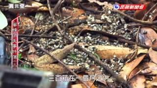 蜜蜂消失事件簿
