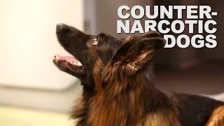 Counter-narcotics training for dog handlers thumbnail