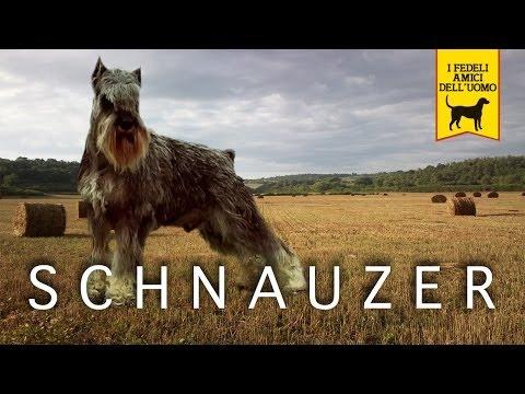 SCHNAUZER trailer documentario