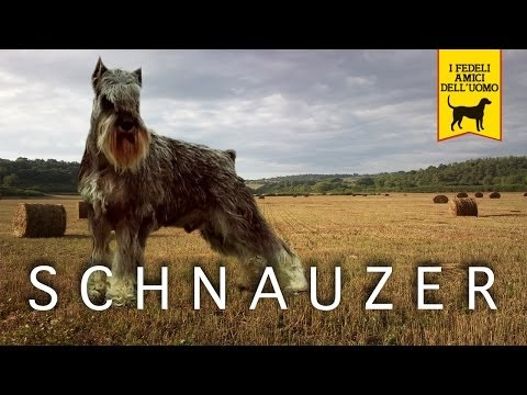 SCHNAUZER trailer documentario