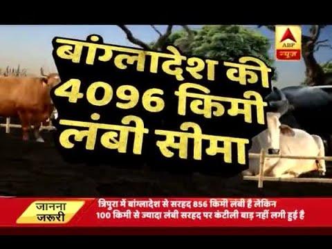 Ghanti Bajao: Big reveleation on massive cow trafficking across Tripura-Bangladesh border