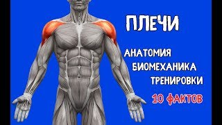 видео Биомеханические особенности тренировки рук