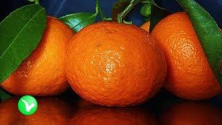 Что нужно знать о МАНДАРИНЕ. Полезны ли мандарины?