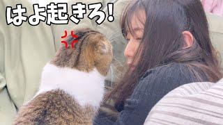 爆睡するママに激怒する猫