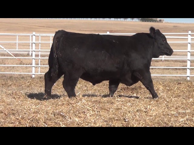 Express Ranches Lot 104