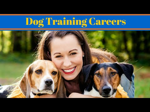 dog training tv show