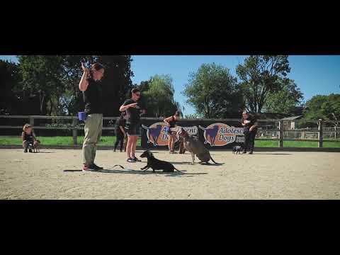 Floyd - Weimaraner - 4 Week Residential Dog Training