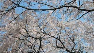 『愛しき日々』 (カラオケ) / 日本テレビ系「白虎隊」ドラマ主題歌 歌: ...