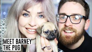 Meet Barney The Pug