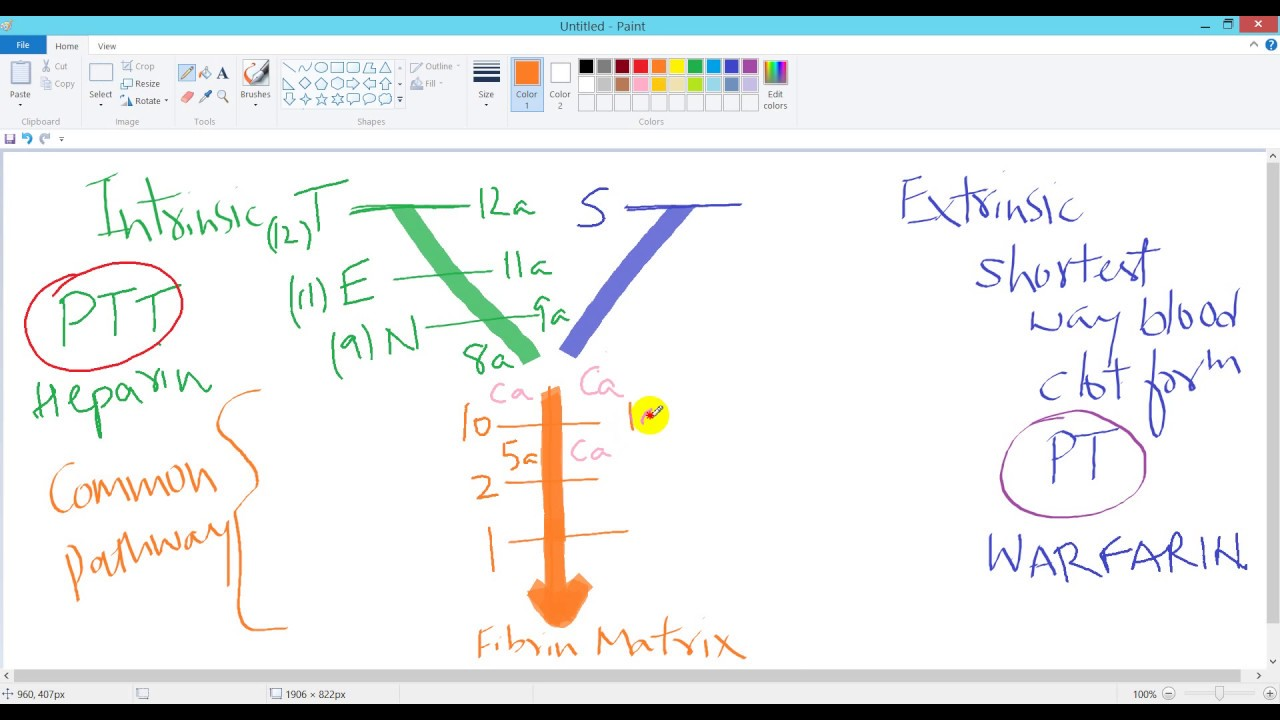 Coagulation Process  Easiest Y Diagram And Mnemonic For