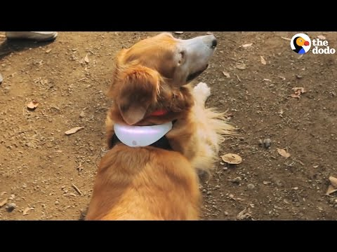New Collar Claims To Show Your Dog's Mood