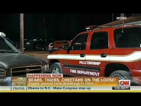 Ohio Exotic Animals On The Loose, Lions And Tigers And Bears, Oh My