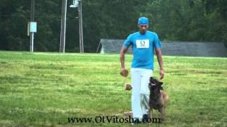 Ebor Ot Vitosha  Obedience AWDF 2013 thumbnail