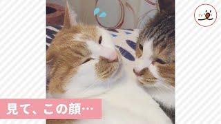 もうペロペロ終わり…? 猫さんの顔を覗いてみたら…😂【PECO TV】 thumbnail