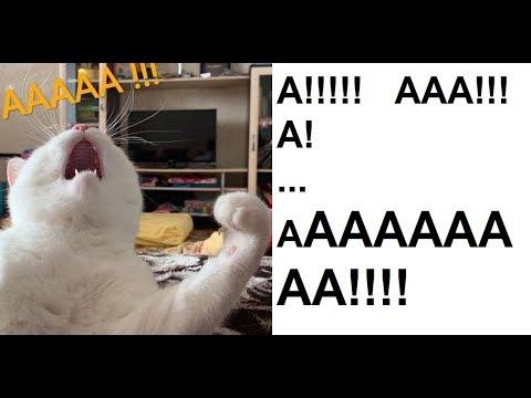 ААААааааааааааааааа!!!! аааааааа!! ааааа!!! ААААААААА!!!