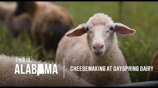 Cheesemaking at Dayspring Dairy | This is Alabama